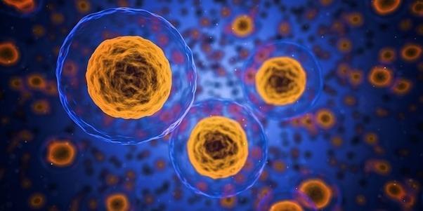 Eine Zelle unter dem Mikroskop - Was ist Autophagie?